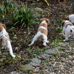 Die Gärtnertruppe