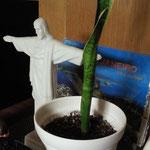 ヨレヨレだったのでキリストの手で支えてもらってます。