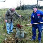 Obstbaumpflanzaktion in Gundelsheim-Tiefenbach mit Peter Heidinger, Paul Haag und Horst Schulz.
