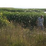 18.06. Litauischer Teil der K. Nehrung mit ein paar Mücken