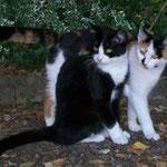 Rosi und Milli