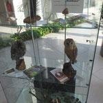 Direkt in die Ausstellung eingebunden ist eine weitere Vitrine mit Präparaten von Waldkauz, Schleiereule und Waldohreule sowie Materialien