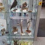 Vogelpräparate in einer Vitrine  im Eingangsbereich des Stadtwerkehauses