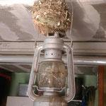 Kurios! Nistplatz auf der Petroleumlampe bei Hans-Dieter Becker in Ranies
