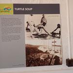 Info Turtle Soup