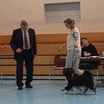 Tibet Terrier Rüde Zwischenklasse V1