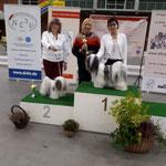 BOB Lhasa Apso, BOB Tibet Terrier und Bester Tibeter