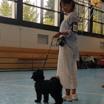 Tibet Terrier Hündin Babyklasse vv1