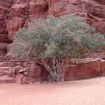 Davanti al Khaz'ali Canyon