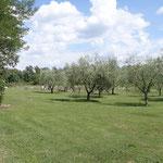 Agriturismo Buonasera (Bagnoregio)