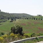 Le terre Senesi