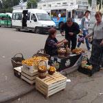 Kostroma - ventidori di funghi