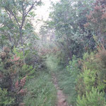 Il sentiero invaso dalla vegetazione