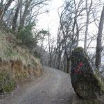 La strada forestale verso Portofino Vetta
