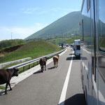 Verso l' Albania