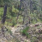 Il sentiero dalla Cappelletta della Bairda