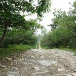 la strada sterrata verso le Rocche Bianche