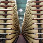 Il Parmiggiano Reggiano a stagionare