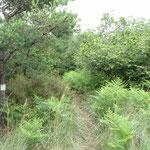 Ancora il sentiero nel bosco