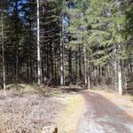 La pista procede nei boschi