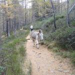 In compagnia degli asini/muli
