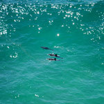 some dolphins sighted from the lighthouse at Byron Bay, New South Wales, Australia