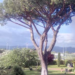 Pinie in Castagneto Carducci Donoratico