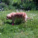 Hund Stella