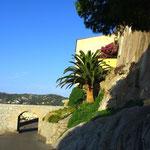 """Palmier coupe ananas, jardin de l'accès chez """"TAO"""""""