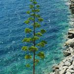 Rocher côté ouest, hampe florale de l'agave, avec, à son pied, une naïade prête au bain