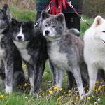4 Generationen (v.l.n.r.: Chika (Mutter), Unsha, Tattoi (Urgroßmutter), Bizen (Großmutter)