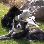 Maru mit seiner Schwester Sumi und ihrer Mutter Unsha