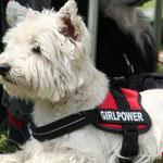 Gina von den Activ Dogs