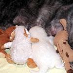 Sumi und ihre Ersatzgeschwister