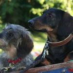 """Tinka und Merlin von den """"Activ Dogs"""""""