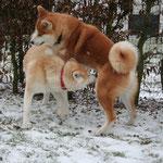 Katsu und Reiko