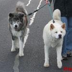 Toya und Chiwa