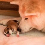 Kaishin direkt nach der Geburt