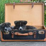 Kuma und Maru haben ih´re Koffer gepackt