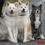 Chuko, Arashi und Chika