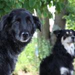Archie und Bruno