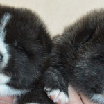 F-Wurf 2 Wochen alt