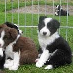 Billy und Bonita 6 Wochen
