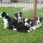 Bonny, Billy, Bonita und Balou 6 Wochen