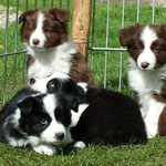 Bonita, Ben, Billy und Balou