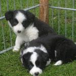 Billy und Balou 6 Wochen
