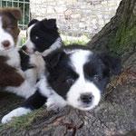 Billy, Bonita und Bonny