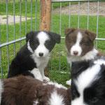 Bonita und Balou - 6 Wochen