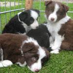 6 Wochen - Ben, Bonita und Balou