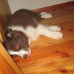 Bonita 7 Wochen, total müde vom Spielen